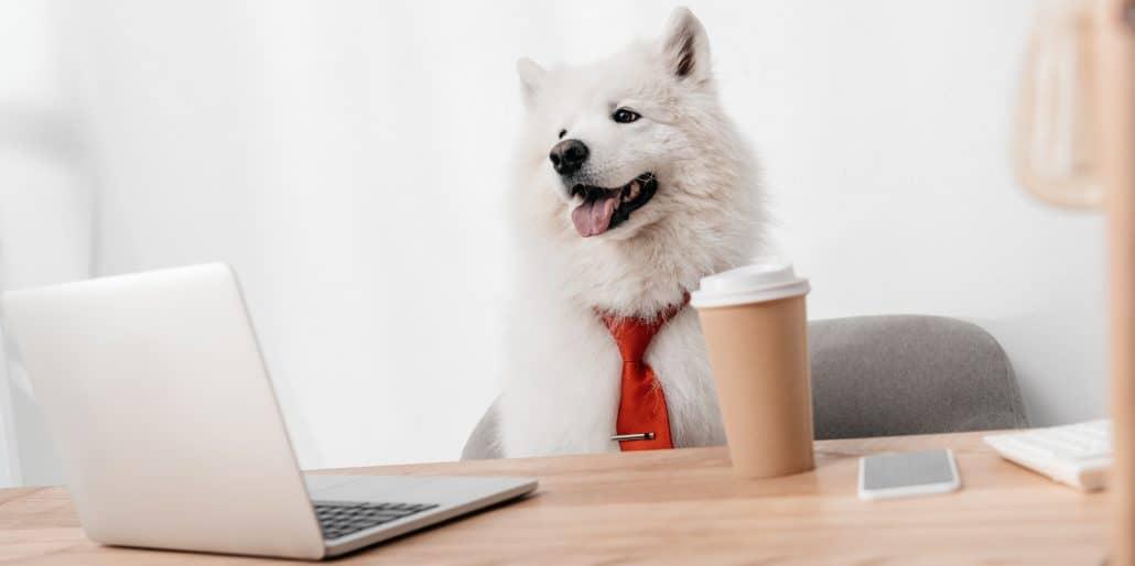 pet care employment